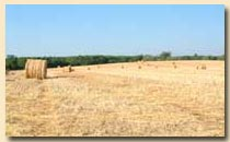 Hay bales near our gite, Bergerac